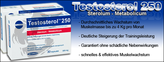 Infos zu STACKER-2 Testo 4HD - Bull-Attack, Inc